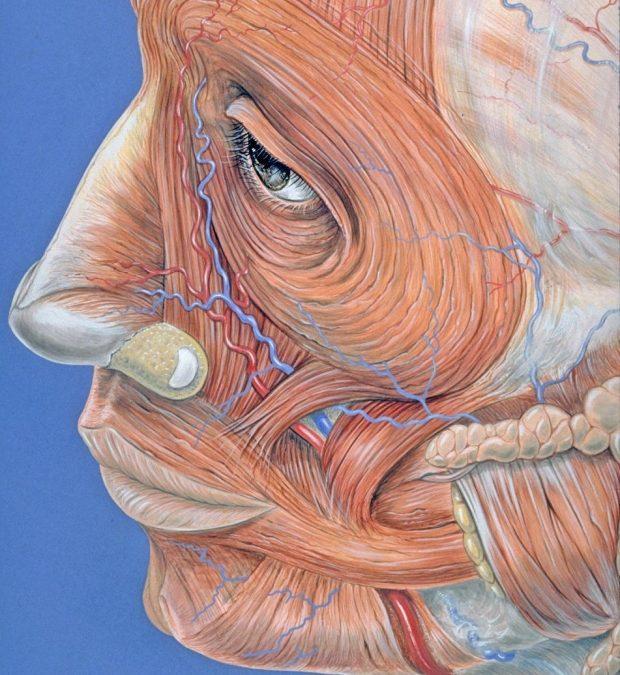 Rehabilitación prótesis de cadera