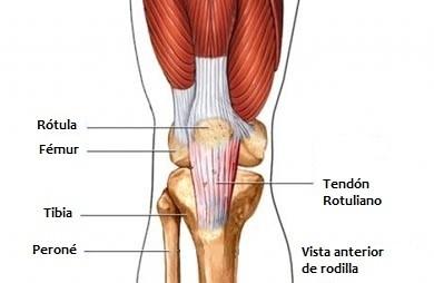 Tendinopatías: tendinosis o tendinitis