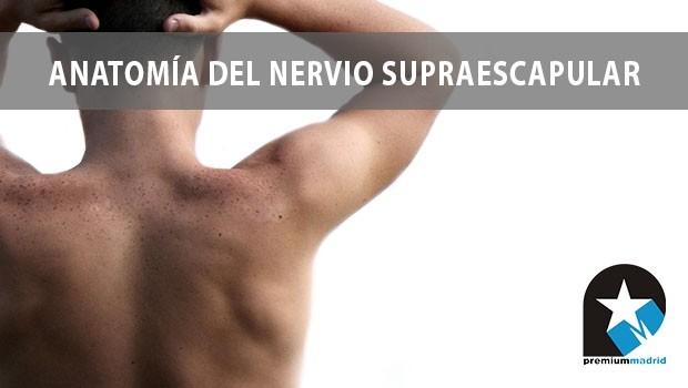 Anatomía del Nervio Supraescapular