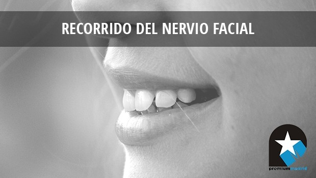 Recorrido del Nervio Facial
