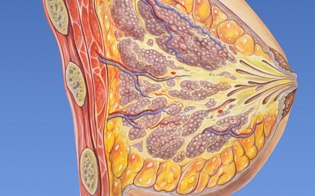 Drenaje linfático en la prevención y el tratamiento de la mastitis