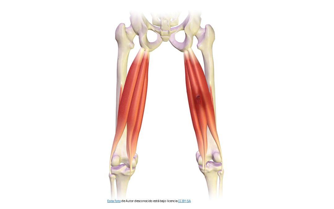 Rotura de Isquiotibiales y Bíceps Femoral- Tratamiento