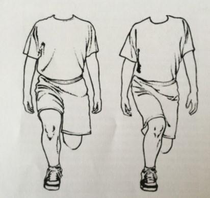 test ligamento cruzado anterior