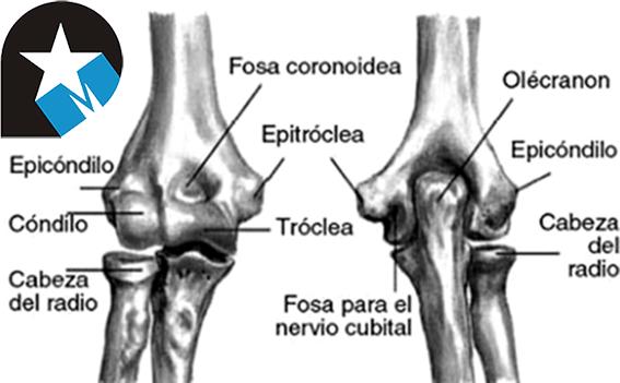 Caso clínico: fisioterapia en la epicondilalgia lateral