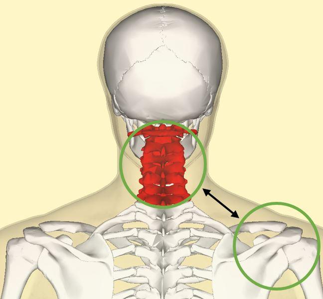 Implicación de la columna cervical en el dolor de hombro