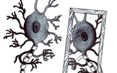 ¿Qué son las neuronas espejo y cómo pueden ayudarnos en nuestra rehabilitación?