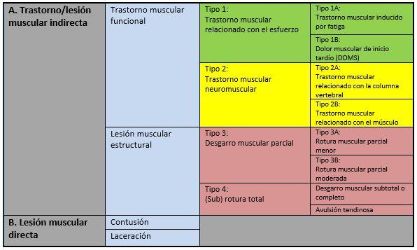 Clasificación de los trastornos y lesiones musculares agudas