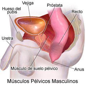 Fisioterapia Suelo pélvico hombres